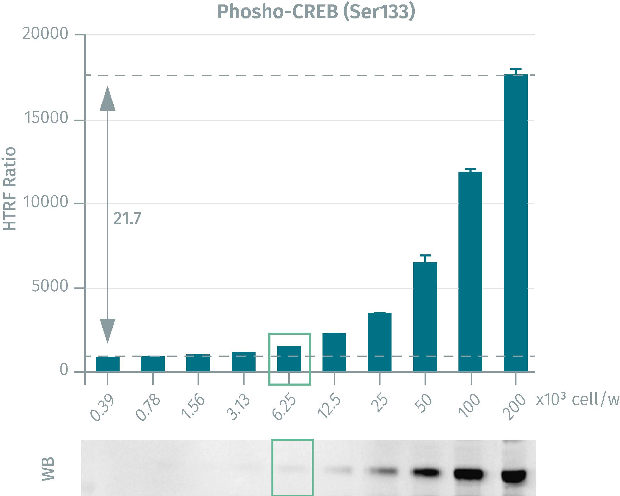Western Blot versus HTRF phospho-CREB assays