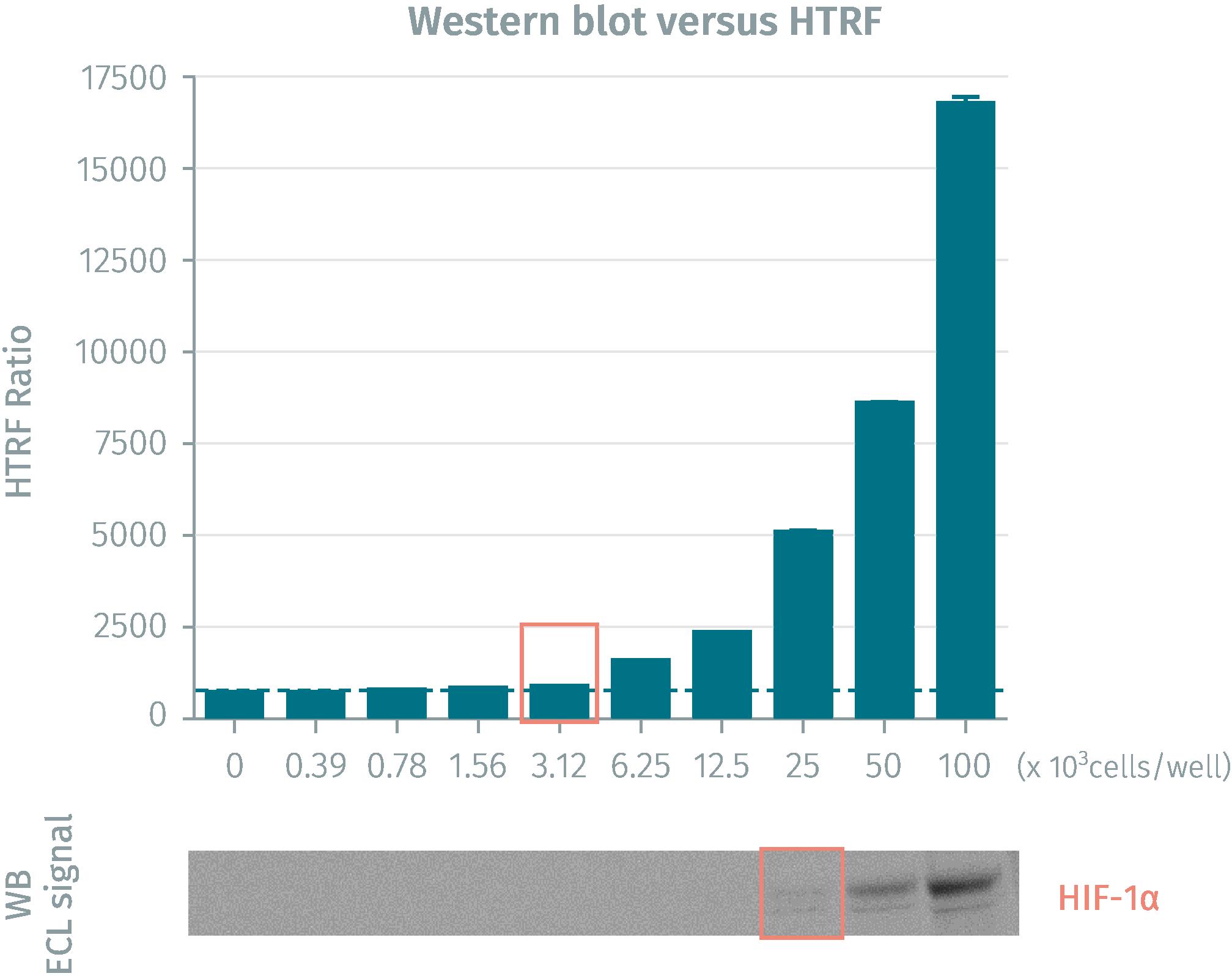 HIF1-a protein level comparison HTRF vs Western Blot