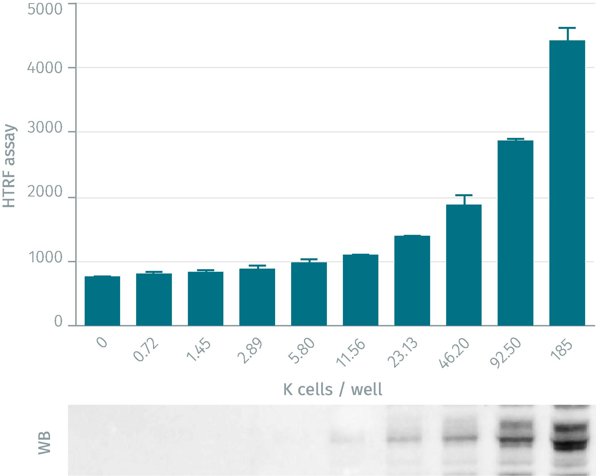HTRF phospho-IKKß assay compared to Western Blot