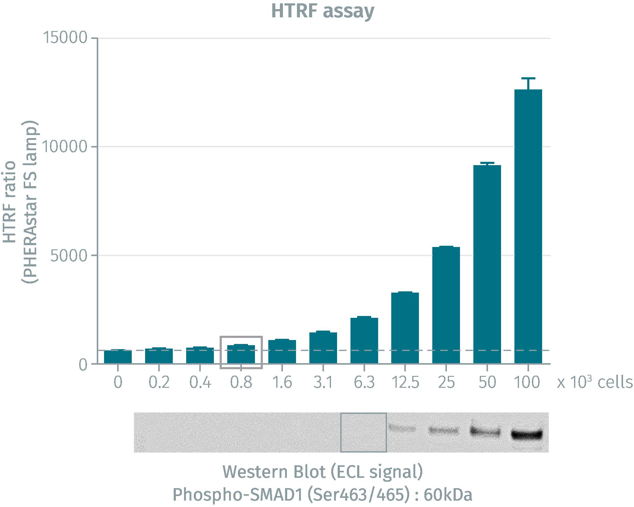 HTRF assay compared to Western Blot using total SLP-76 cellular assays on human Jurkat cells