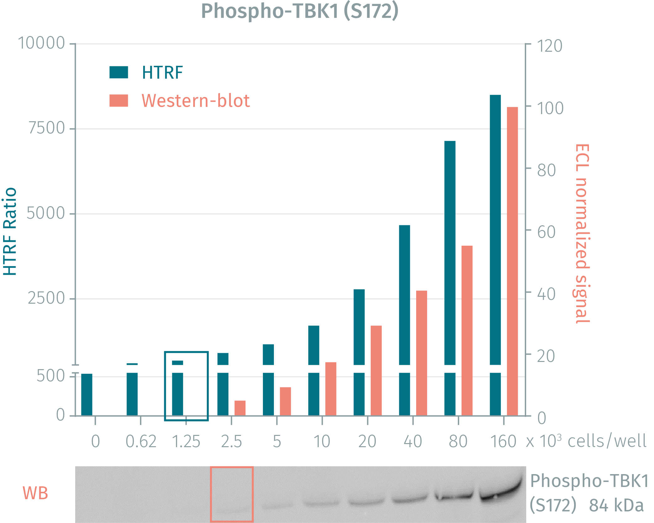 HTRF Phospho-TBK1 assay compared to WesternBlot