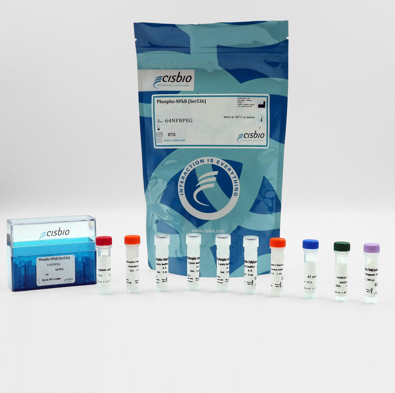 Phospho-NFkB (Ser536) cellular kit
