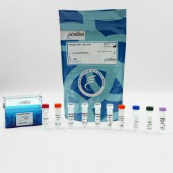 Phospho-AKT1 (Ser473) cellular kit