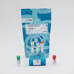 Human TNFalpha/TNFR1 binding kit