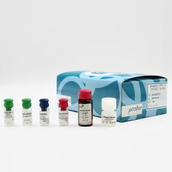 Phospho-ERK (Thr202/Tyr204) cellular kit