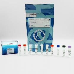 Phospho-JNK (Thr183 / Tyr185) cellular kit