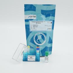 Amyloid beta 1-42 Kit